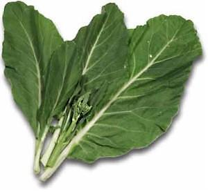 CHINESE KALE 100 seeds Asian broccoli vegetable kai-lan leafy green