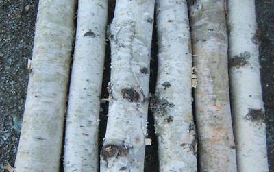White Birch Fireplace Logs 6xlarge Logs 2.5 To 4 X 20