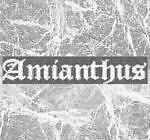 amianthus