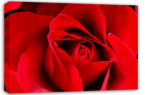 LARGE-BEAUTIFUL-RED-ROSE-FLORAL-BOX-CANVAS-PICTURE-A1