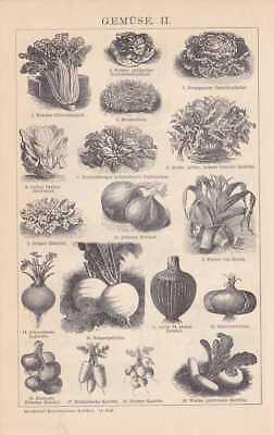 Gemüse Salat Wirsing Kohl Porree Mangold HOLZSTICH 1898