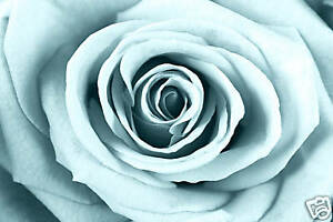duck-egg-blue-rose-canvas-art-print-artwork-picture-A1