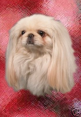 Pekingese A6 Blank Card Design No 5 By Starprint