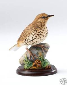 Border Fine Arts Song Thrush Bird Figurine 12353