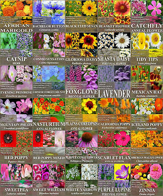 Flower Seeds 30 Types Garden Fragrant -bees Butterfly