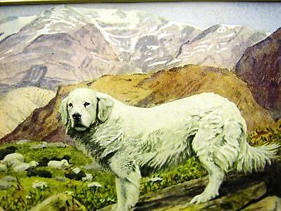 Agassiz Fuertes 1919 PYRENEAN SHEEP DOG Antique Art Print Matted