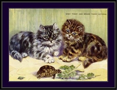 English Picture Grey Brown Tabby Kitten Cat Kittens Cats Vintage Poster Print