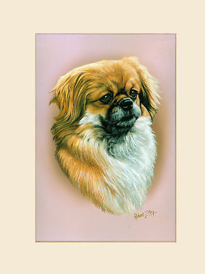 Original Tibetan Spaniel Painting by Robert J. May