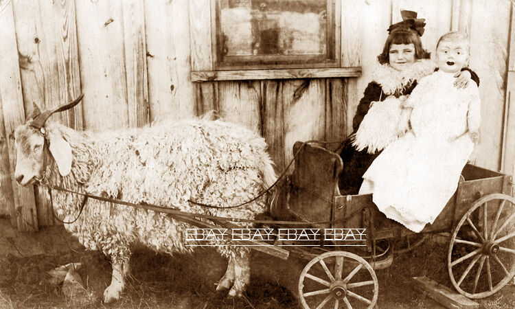 PHOTO OF A YOUNG GIRL IN A OLD GOAT CART WAGON WITH HER