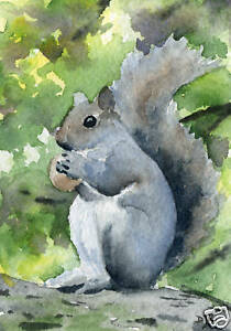 SQUIRREL-Painting-ACEO-Miniature-Art-Print-on-W-C-Paper-Signed-by-Artist-DJR