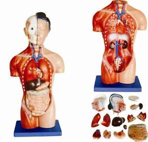 Anatomie-Modell-Torso-Modell-weiblich-15teilig-42cm-vom-Fachhaendler