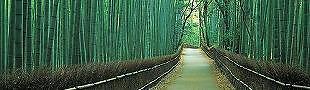 Linya Japan