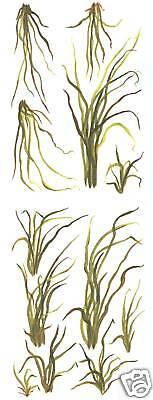SEA GRASS WALL ART TRANSFERS CREATIVE ART DECAL WALL DECOR TATOUAGE