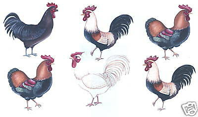 ROOSTERS DECORATIVE TRANSFERS WALL ART DECOR CREATIVE WALL ART TATOUAGE