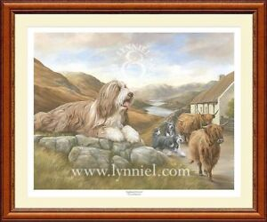 BEARDED-COLLIE-beardie-dog-print-039-Highland-Drovers-039