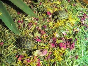 Tortoise Readi Grass Flower & Plant Mix- BEDDING FOOD