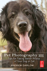 Pet-Photography-101-Tips-for-Taking-Better-Photos-of-Your-Dog-or-Cat-by