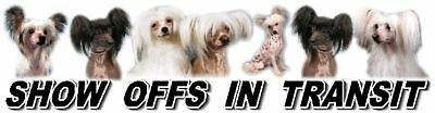 CHINESE CRESTED Show Off Dog Car Sticker By Starprint