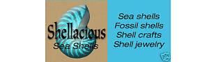 Shellacious Sea Shells
