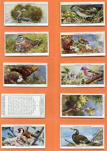 Players Cig Cards Set 25 Birds and Their Young Unissued