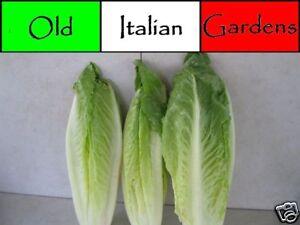500-Parris-Island-Romaine-Heirloom-Lettuce-Seeds-Non-GMO-Non-Hybrid-Great-Taste