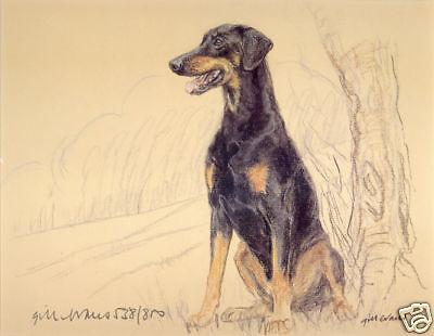 DOBERMANN PINSCHER DOBERMAN DOG FINE FINE ART LIMITED EDITION PRINT