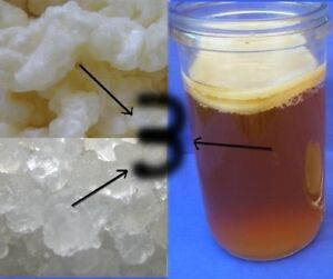 A2 MILK & WATER KEFIR grains & KOMBUCHA -COMBO X 3 Organic Probiotic Cultures