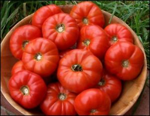 TOMATO 'Mary Italian' 15 seeds BEST TASTE vegetable garden HEIRLOOM NON GMO