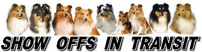 SHETLAND SHEEPDOG Show Off Car Sticker By Starprint