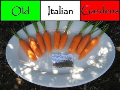 500-Little-Finger-Carrot-Seeds-French-Heirloom-Non-GMO-Same-Day-Shipping