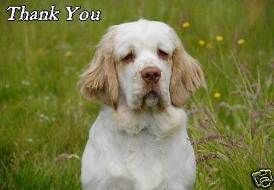 Clumber Spaniel Thank You Card By Starprint