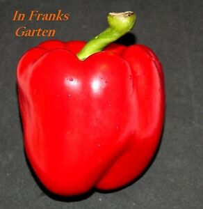Paprika-Red-Green-Large-Fruity-vitamin-rich-ertragreich-gem-Loops-min-20-Seeds