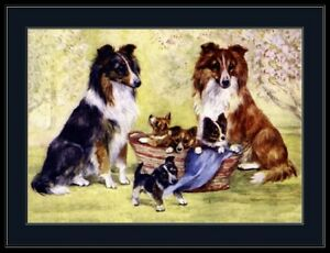 Print Sheltie Shetland Sheepdog Dog Puppy Art Picture