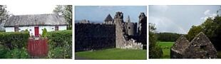 Celtic Shamrock Expressions