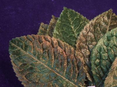 """Vintage Millinery Flower Large 3"""" Velvet Leaves 12pc Lot Y19 Green for Hat"""