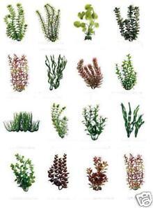 Plantastic-9-realistic-plastic-fish-aquarium-plant