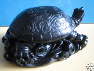 Schildkröten Feng Shui Schildkröte Schildkröten