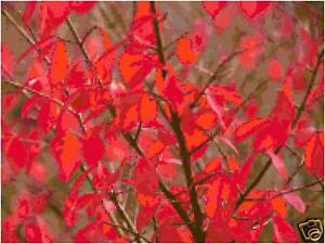 Red-Leaves-Autumn-Fall-Counted-Cross-Stitch-Pattern-Design-Chart