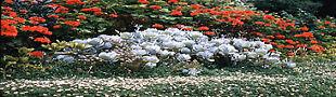 Succulent Garden Centre