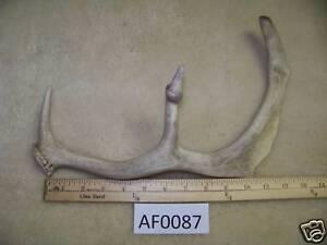 Fallow-Deer-Shed-Knive-Handle-Wildlife-Ranch-AF0087