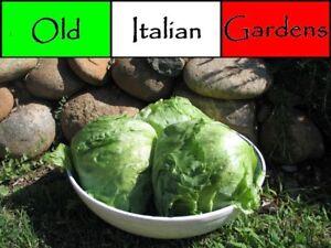 500-Great-Lakes-Head-Lettuce-Seeds-Heirloom-Iceberg-Type-Non-GMO-No-Hybrid