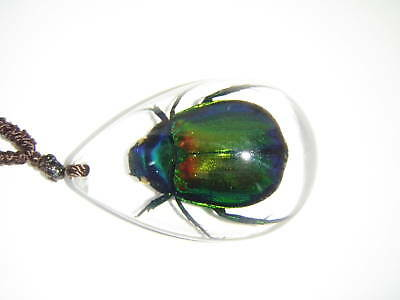 Real Scarab Beetle Necklace