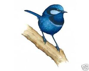 NATURAL-SOUNDS-BIRD-SONG-CD-FOR-RELAXATION-SLEEP-AID