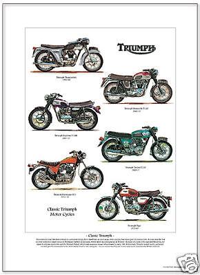 TRIUMPH MOTOR CYCLES Art Print - Thunderbird Bonneville
