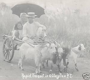 Goat-Car-photo-postcard-Albay-Philippines-ca-1915