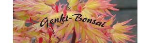 Genki-Bonsai