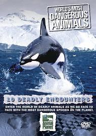 World's Most Dangerous Animals - Deadly Encounters (DVD, 2005)