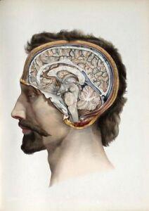 19TH-C-ANTIQUE-MEDICAL-HUMAN-BRAIN-A3-POSTER-REPRINT