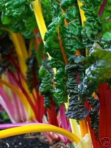 Swiss-Chard-Rainbow-Mix-Salad-Herb-Seed-Approx-200-sds