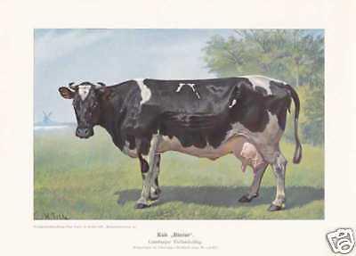 "Lüneburger Kuh ""Blesse"" FARBDRUCK von 1925 Reprint"